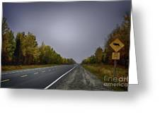 Highway Of Foliage Greeting Card