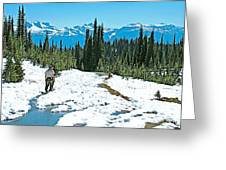 Hiking In Spring In Revelstoke National Park-british Columbia  Greeting Card