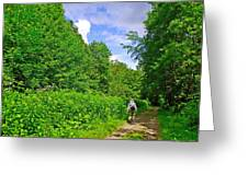 Hiking Trail Along Rivier Du Nord In The Laurentians North Of Montreal-qc Greeting Card