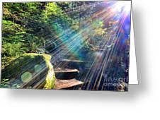 Hiking Trail Sun Flares Greeting Card