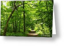 Hiking Trails To Mont Morency Falls Greeting Card