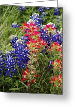 Hill Country Bloom Greeting Card