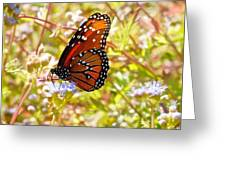Hill Country Butterfly Greeting Card