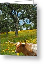 Hill Country Longhorn Greeting Card