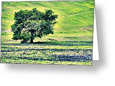 Hill Country Scenic Hdr Greeting Card