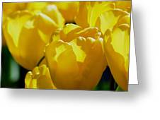 Hill Of Golden Tulips Greeting Card
