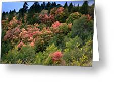 Hill Side Colors Greeting Card