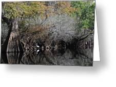Hillsborough Egret 01 Greeting Card
