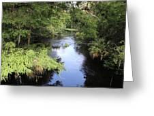 Hillsborough River Greeting Card