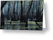 Hillsborough Swamp Autumn 32 Greeting Card