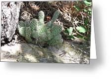 Hillside Cactus Plant Greeting Card
