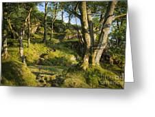 Hillside Forest Greeting Card