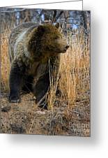 Hillside Grizzly Greeting Card