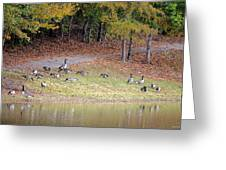 Hillside Of Canadian Geese Greeting Card