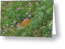 Hillside Of Wildflowers Greeting Card