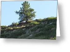 Hillside Scenery With White Tail Buck. Greeting Card