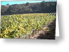 Hillside Vineyard Greeting Card