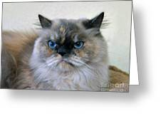 Himalayan Persian Cat Greeting Card