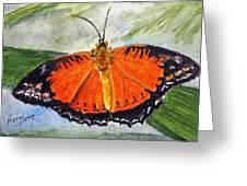 Himalayan Red Lacewing Greeting Card
