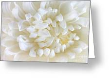 Hint Of Color Greeting Card