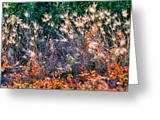 Hint Of Fall Colors 15813 Greeting Card