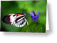 Hint Of Red Butterfly Greeting Card