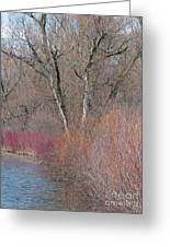 Hint Of Spring Greeting Card