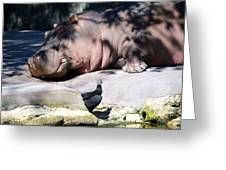 Hippo And Friend Greeting Card