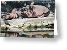 Hippo At Leisure Greeting Card