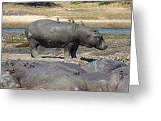 Hippo - Family Greeting Card