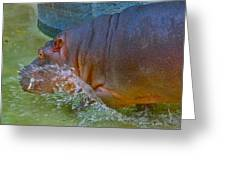 Hippo Taking A Plunge Greeting Card