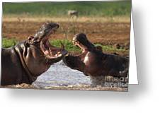 Hippo Threat Display Greeting Card