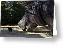 Hippo Vegetarian Greeting Card by Graham Palmer