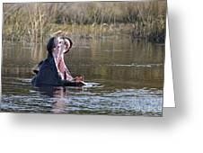 Hippo Yawning Greeting Card