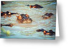 Hippopotamus Group In River. Serengeti. Tanzania Greeting Card