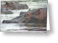 Hippopotamus In Kenya Greeting Card