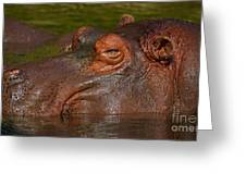 Hippopotamus With Its Head Just Above Water Greeting Card