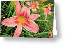 Hiroko Pink Daylily Greeting Card