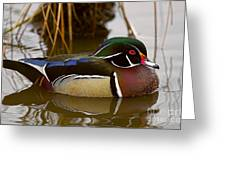 His Majesty Wood Duck Greeting Card
