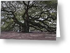 Historic Angel Oak Greeting Card