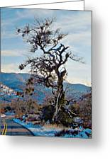 Hitchhiker On Highway 173 Greeting Card