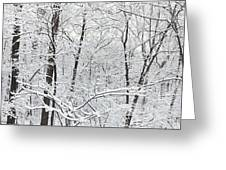 Hoar Frost Covered Trees In Forest Greeting Card