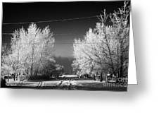 hoar frost covered trees on street in small rural village of Forget Saskatchewan Canada Greeting Card