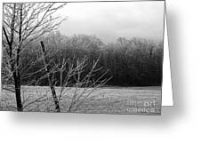 Hoar Frost On The Wood Greeting Card