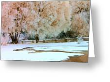 Hoar Frosted Trees Greeting Card