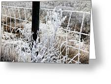 Hoarfrost 16  Greeting Card