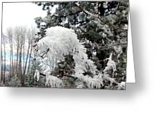 Hoarfrost 19  Greeting Card