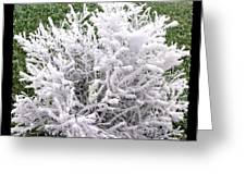 Hoarfrost 20 Greeting Card