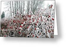 Hoarfrost 25 Greeting Card