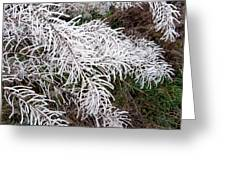 Hoarfrost 26 Greeting Card